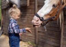 vakantieboerderij limburg