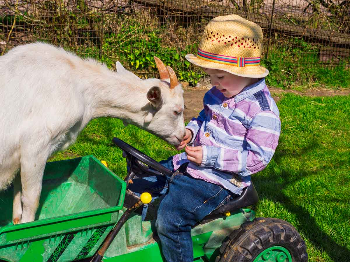 vakantieboerderij mini tractor